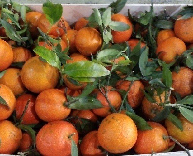 Mandarinas.Mandarina oronules de la mejor calidad