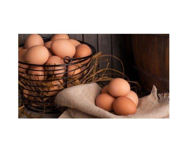 Huevos ecológicos . Nuestras gallinas son muy felices, están libres y gozan de una comida ecológico.