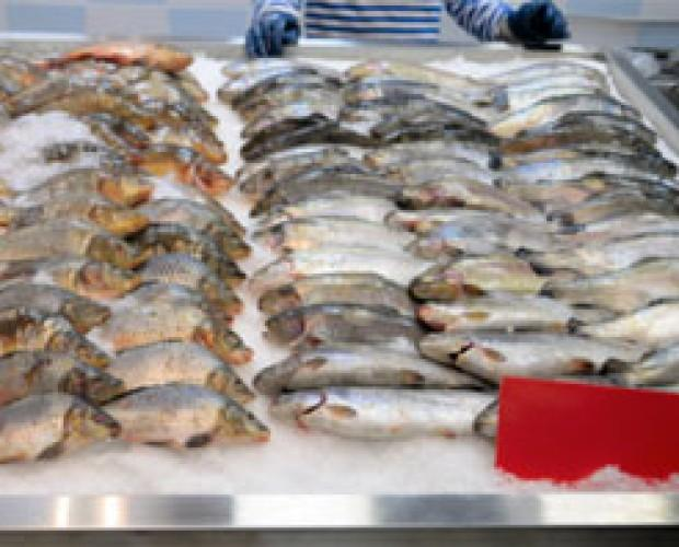 Pescado. Calidad de pescado para su negocio de restauración