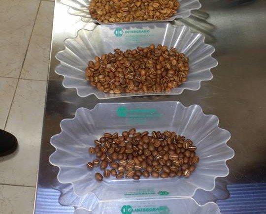 Variedad de cafés. De los mejores orígenes