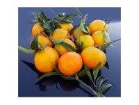 Mandarina Oronules caja 5kg