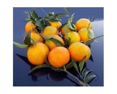 Mandarina Oronules caja 5kg. Deliciosas Mandarinas