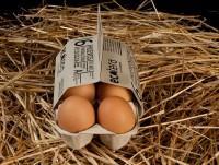 Proveedores Huevos 100% ecológicos