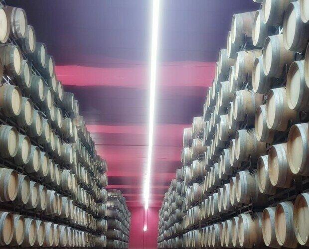 Vinos. Vino Tinto. Hasta 20.000 barricas en guarda