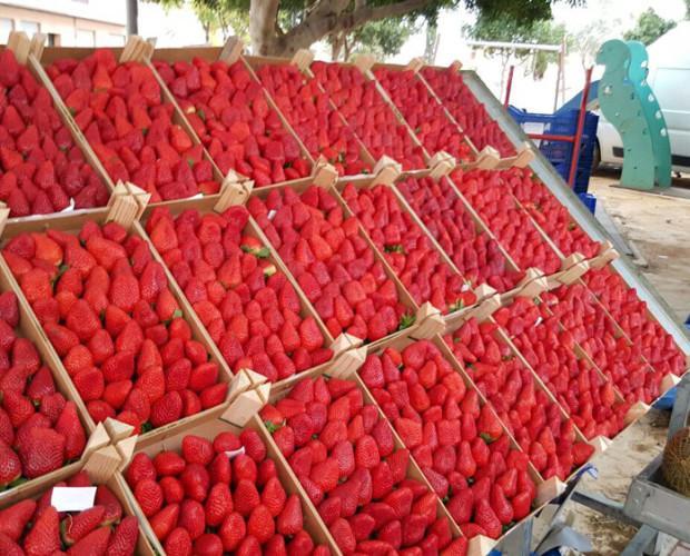 Fresas. Trabajamos con frutas de temporada