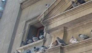 Control de aves urbanas. Fumigación y control de plagas