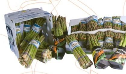 Proveedores de Vegetales. Espárragos verdes de importación