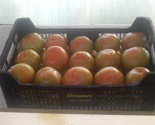 Tomates.Somos proveedores de tomates de calidad