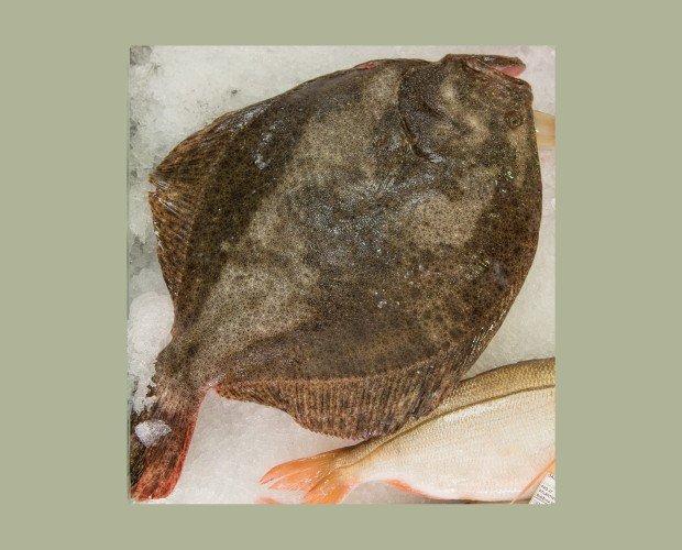 Rodaballo Salvaje. Es un pez plano, con el cuerpo y la cabeza plana y los ojos muy pequeños