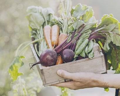 Su frutería de confianza. Somos la única frutería en la que las frutas y las verduras esperan en el árbol hasta que las compras