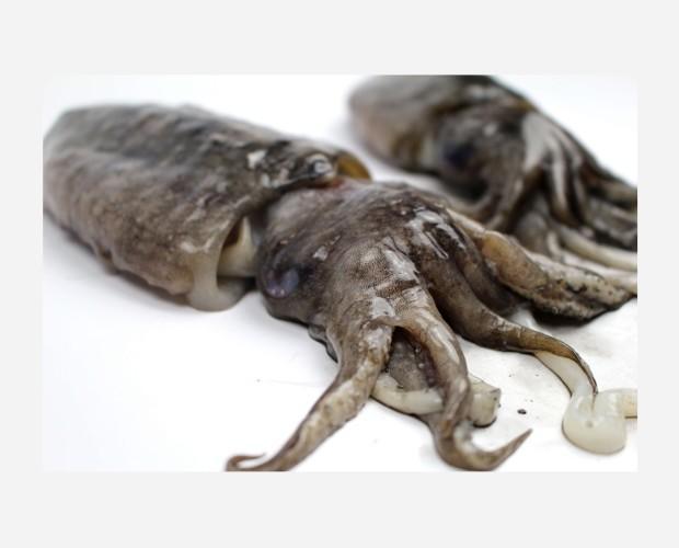 Cefalópodos Frescos. Sepia Fresca. Choco entero