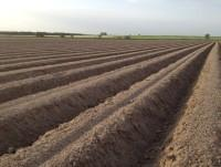Nuestras plantaciones