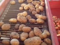 Patatas de calidad