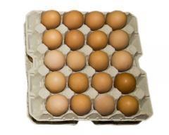 Huevos frescos. Huevos de gallina a granel y ovoproductos