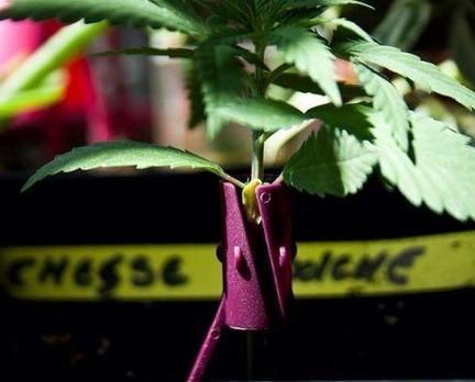 Complemento para semillas. Nos ayuda a cuidar de nuestras semillas en sus primeros días de crecimiento