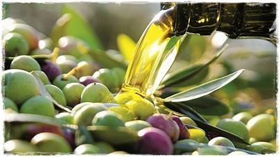 Olivas. Las mejores olivas para el mejor aceite