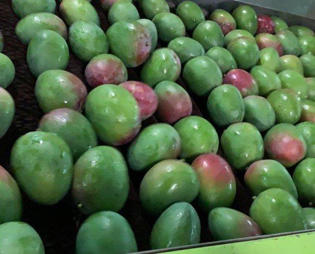 Mangos.Calidad de importación