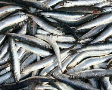 Boquerones de Huelva. Es uno de los pescados mas consumidos por la población.