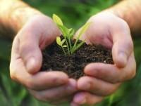 Proveedores Cultivar plantas