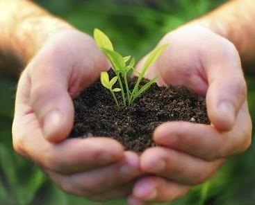 Cultivar plantas. Variedad de plantas