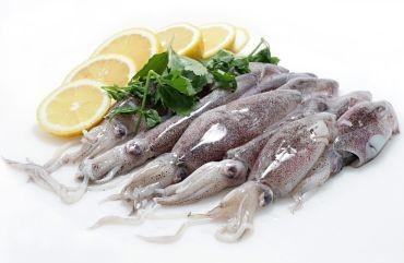 Cefalópodos Frescos. Calamares Frescos. Calamar  patogónico de 12 a 15 cm