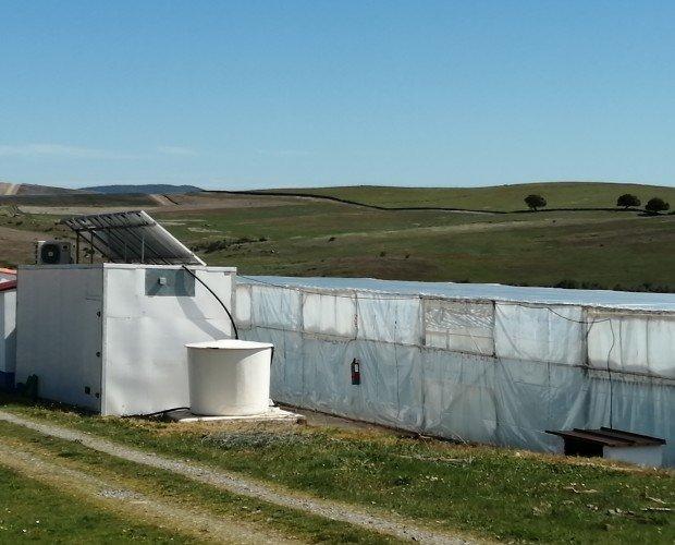 Instalaciones. Nuestras instalaciones de cultivo de espirulina en Burguillos del Cerro (Badajoz)