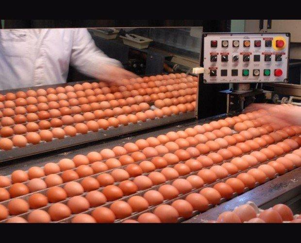 Huevos. Huevos frescos de excelente calidad