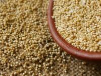 Proveedores Pop de quinoa