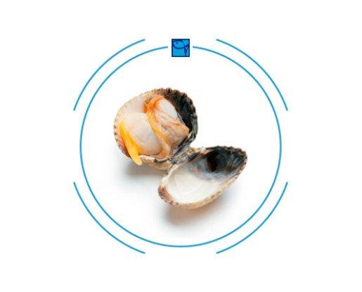 Berberechos Frescos.Es uno de los moluscos bivalvos más consumidos y de mayor demanda comercial