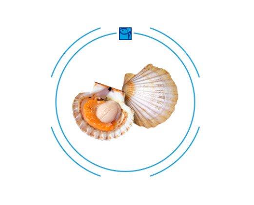 Vieira Gallega. Estos moluscos tienen sólo 60 calorías y su textura y sabor lo convierten en todo un manjar