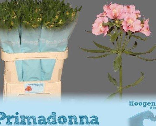 Flores.Flores preservadas
