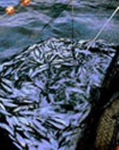 Pescado. Los mejores productos del mar a precio accesible