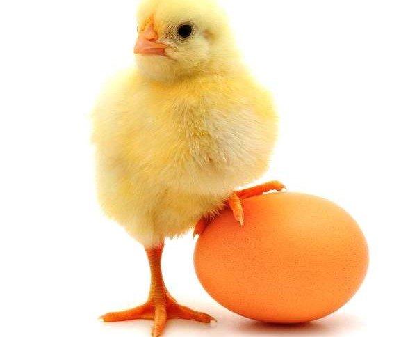 Huevos Frescos de Gallina.De la mejor calidad