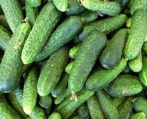 Pepinos.Gran variedad de verduras y hortalizas