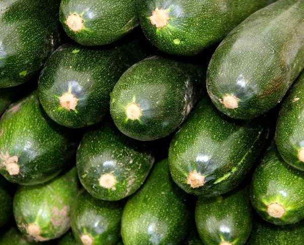 Calabacines.Calabacín verde granel