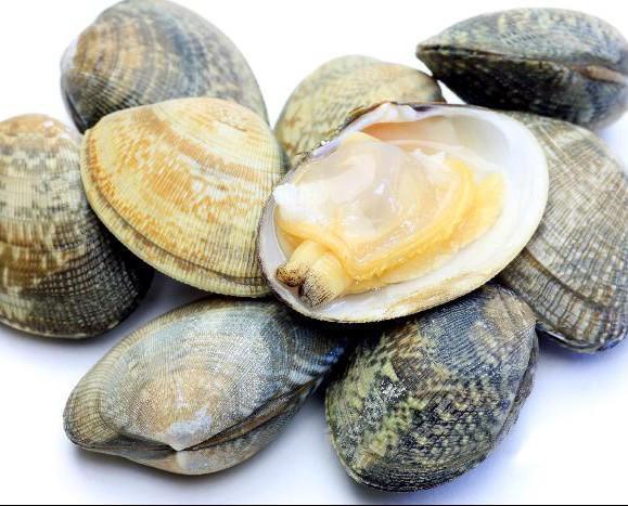 Almeja japonesa. Proveedores de almejas