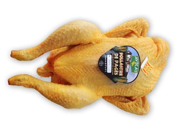 Pollo Payés. Pollo de payés de gran calidad