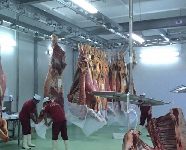 Fundas para carne. Fundas de conservación y transporte