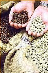 Café. Tostado de café en grano proveniente de arabia