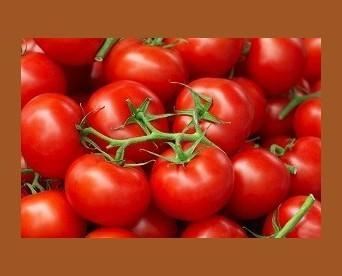 Tomates. Tomate frito El Chaval