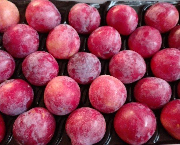 Ciruelas. Disponemos de una vasta gama de frutas.