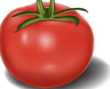 Tomate en polvo. Principio activo Licopeno, idóneo para sustitución de colorantes y aromas a tomate.