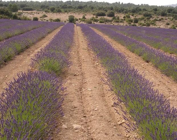 Plantaciones. Productos naturales de calidad