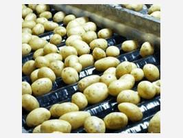 Proveedores de patatas