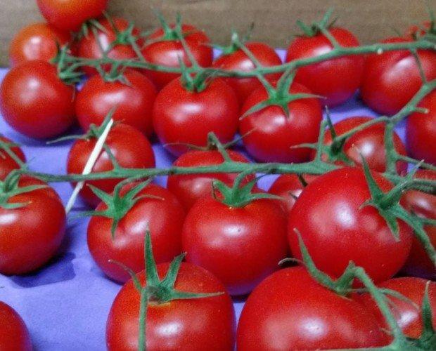 Cherry rama. Producto certificado