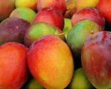 Mangos.Deliciosos mangos