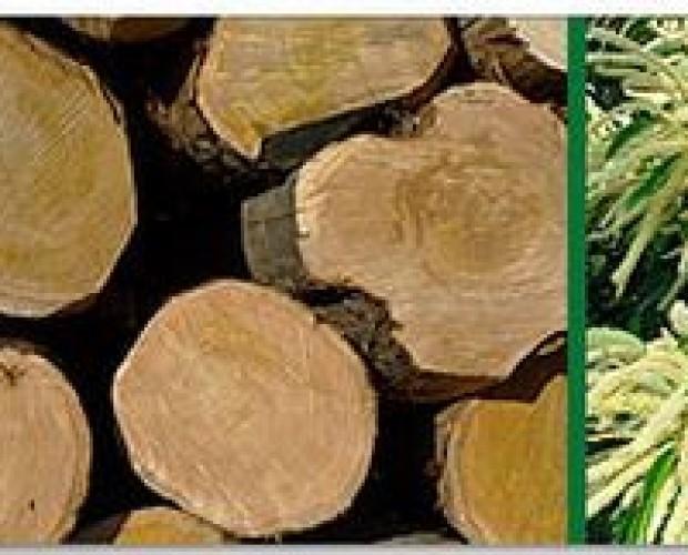 Troncos. Productos de madera y troncos