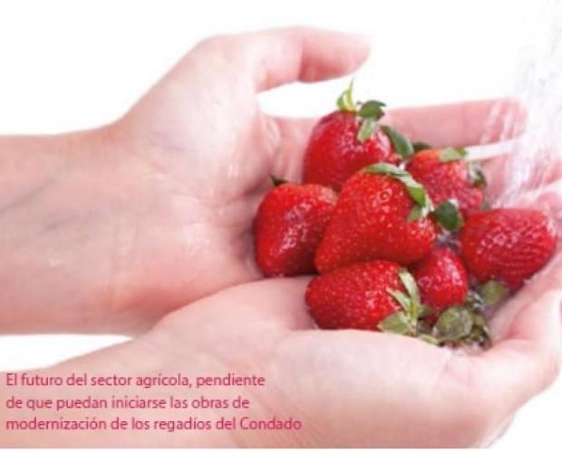 Fresas.Ofrecemos productos frescos y naturales