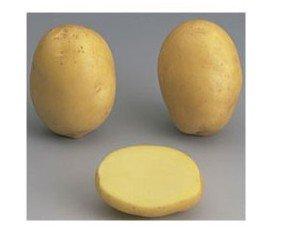 Variedad Ágata. Oval de forma, piel amarilla y lisa a bastante lisa, carne amarilla clara.