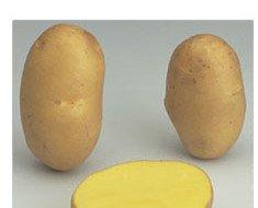 Variedad Agria. Oval alargada de forma, piel amarilla y lisa a bastante lisa, carne amarilla.